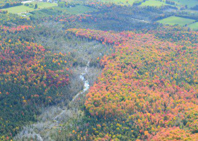 Fall Colours - Ariel View